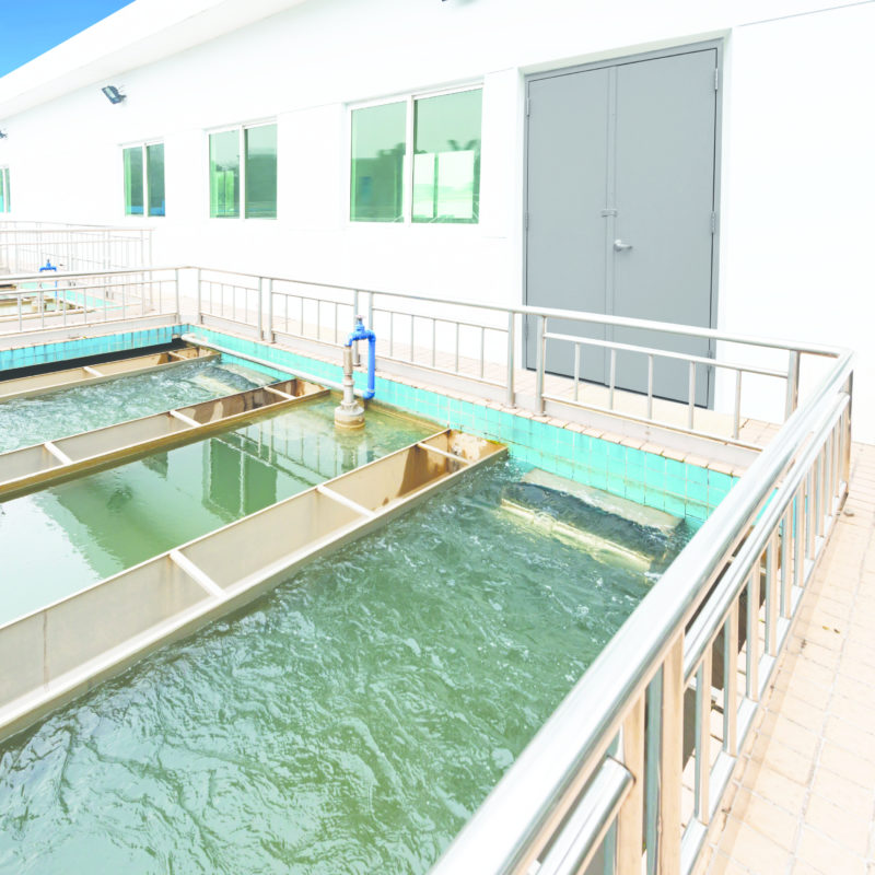 Wastewater Treatment plant final crop
